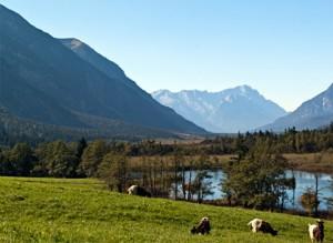 Einstreuwiesen Sieben Quellen Süd, Zugspitze