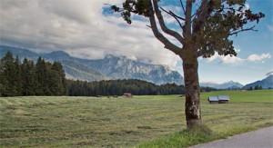 Futterwiesen bei Krün-Bärnbichl